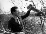 """Lieutenant Harry S. McMurray of the 305th Bomb Group and San Leandro, Califronia, feeds """"Flak,"""" his crew's pet monkey. (Roger Freeman Collection FRE1113)"""