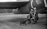 """Meatball"" runs to greet a B-17 crewman returning from a mission over occupied Europe in March 1944. (Roger Freeman Collection FRE1264)"