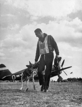"Lt. Howard ""Deacon"" Hively of the 4th Fighter Group greets ""Duke,"" a police Alsatian which belongs to another member of the squadron, Lt. Ralph K. Hofer, in October 1943. (Roger Freeman Collection FRE2250)"